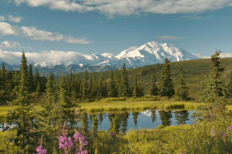 Most Beautiful National Parks in the USA: Denali National Park