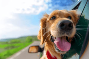 11 Tips for Road Tripping with a Dog