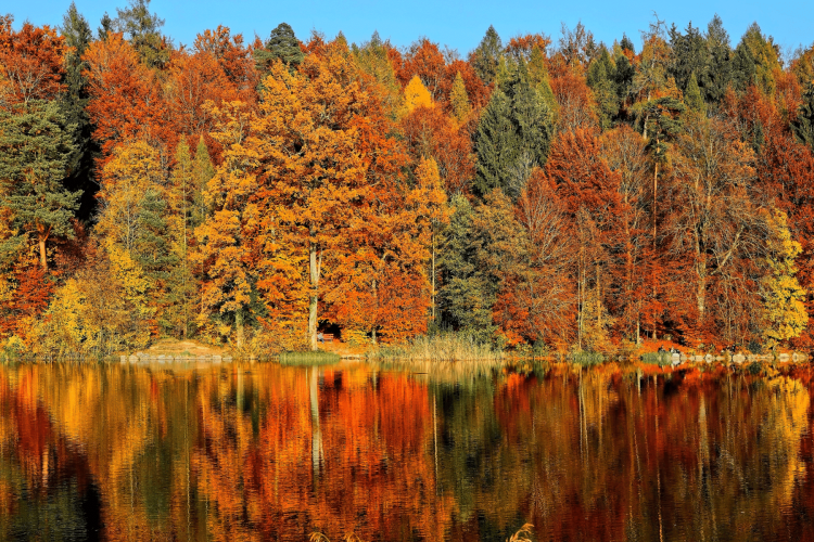 leaves changing Fall Travel Bucket List