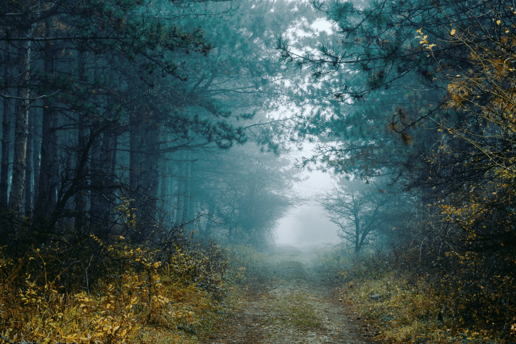 The Forest of the Jersey Devil