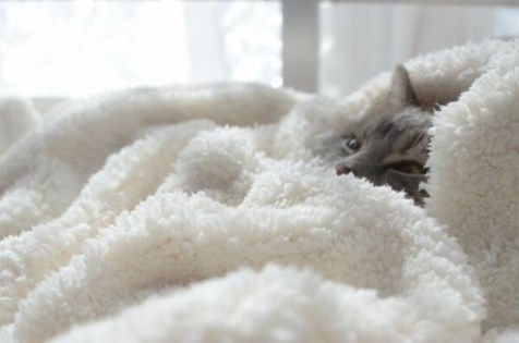 e642ld-l-610x610-home+accessory-blanket-white-soft-fuzzy-bedroom-cats-cozy-comfy
