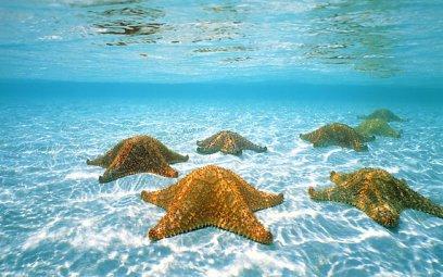 some starfish