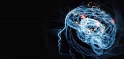 An image of thehuman brain