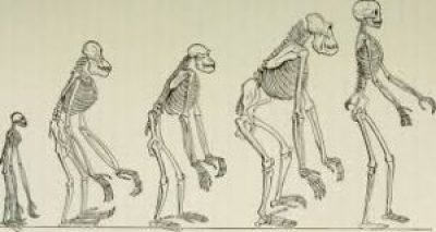 Picture of human evolution