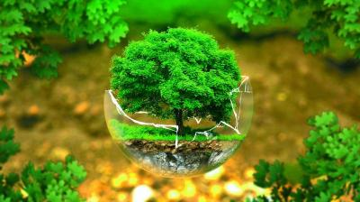 An image of a tree in a bubble.