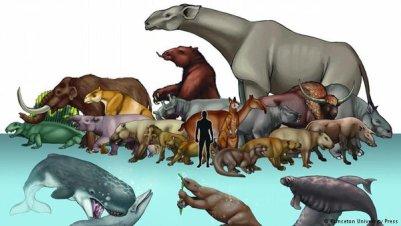 different animals