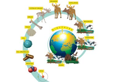 The major areas of biological studies
