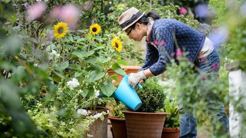 An image of a volunteer student gardener