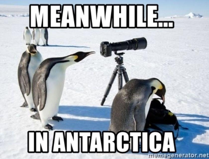 Meme about Antarctic, the coldest continent