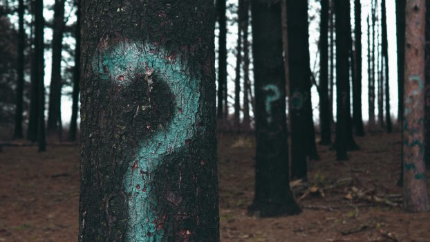 question marks on trees in the forest to symbolize why we should recycle.