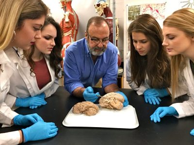 Biology professor James Cosentino (center) examines a brain at Millersville University with students.
