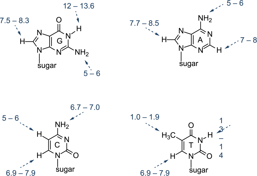 NMR chemical shifts in 1H NMR spectra of nucleic acid bases