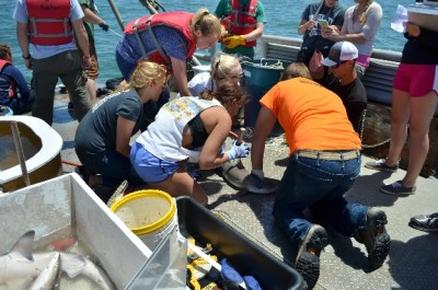 A study by Marine Biology and Ocean Sciences and Coastal Studies (OSCS) students to capture and tag sharks.
