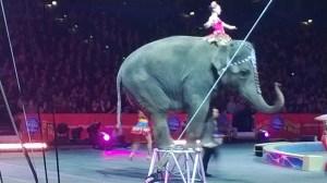 elephantball