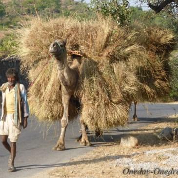 Les métiers en Inde