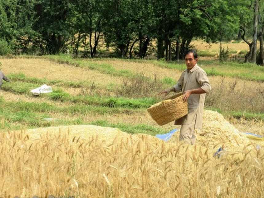 india-kangra-farmer