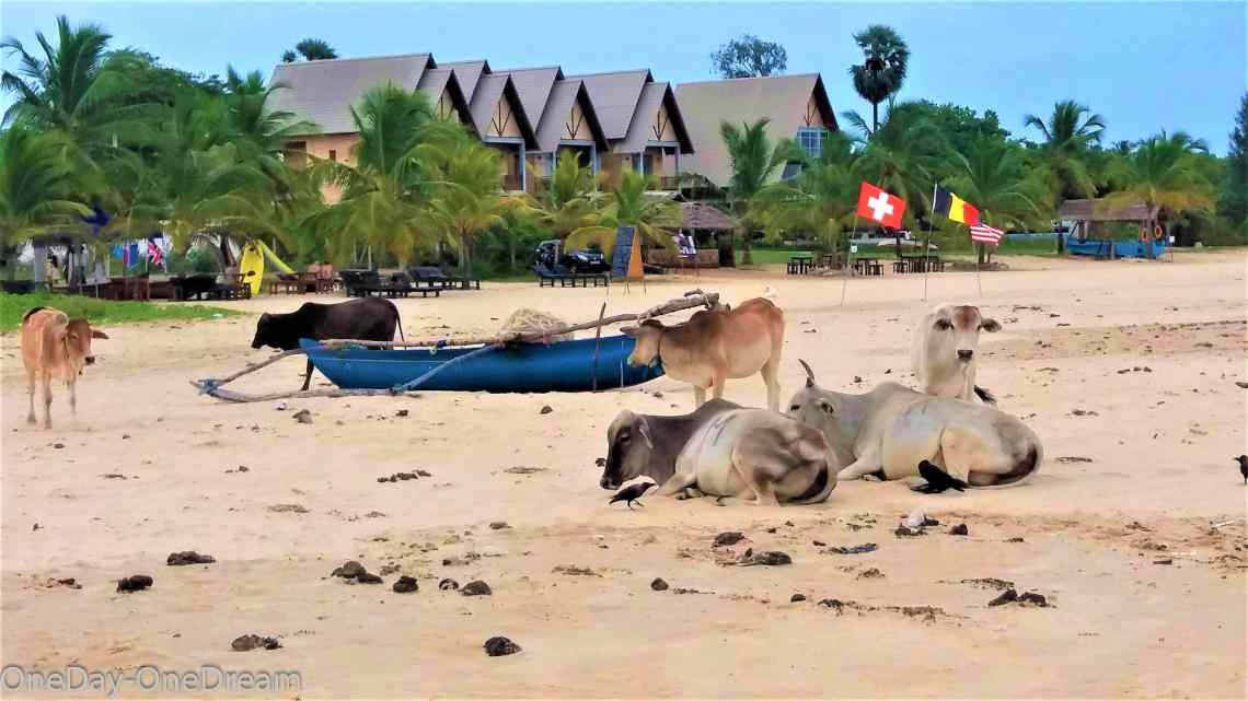 kalhudah-beach-buffalo
