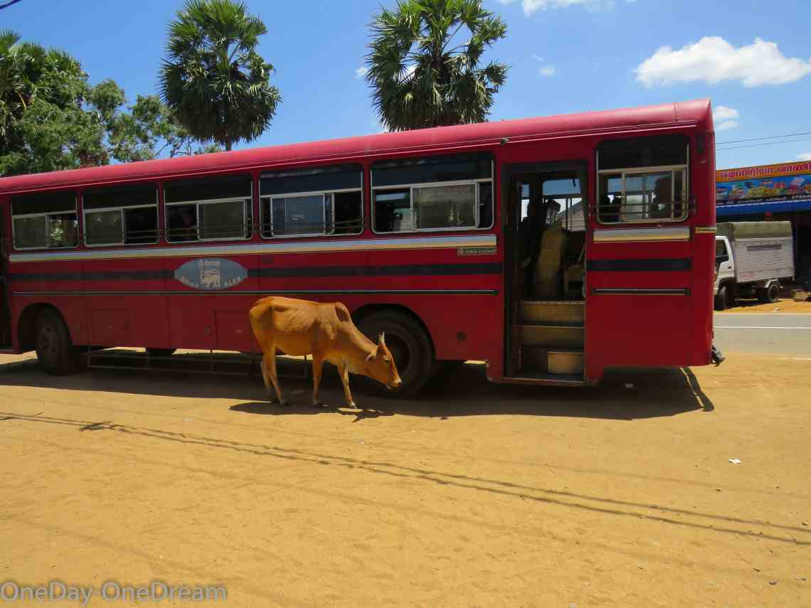 sri-lanka-red-bus