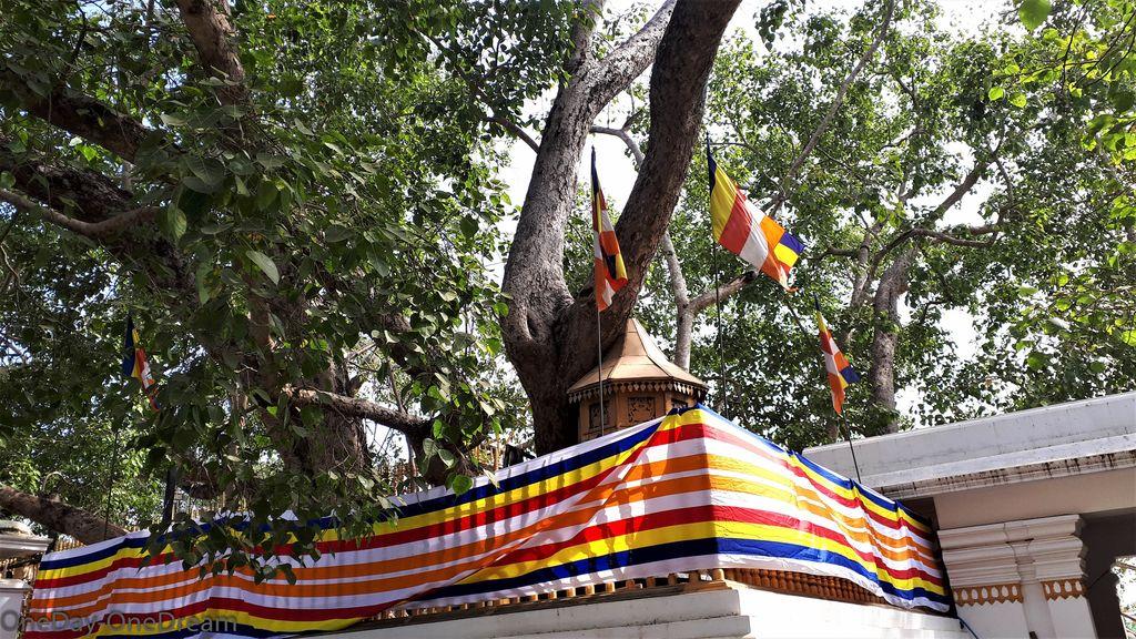 arbre-anuradhapura