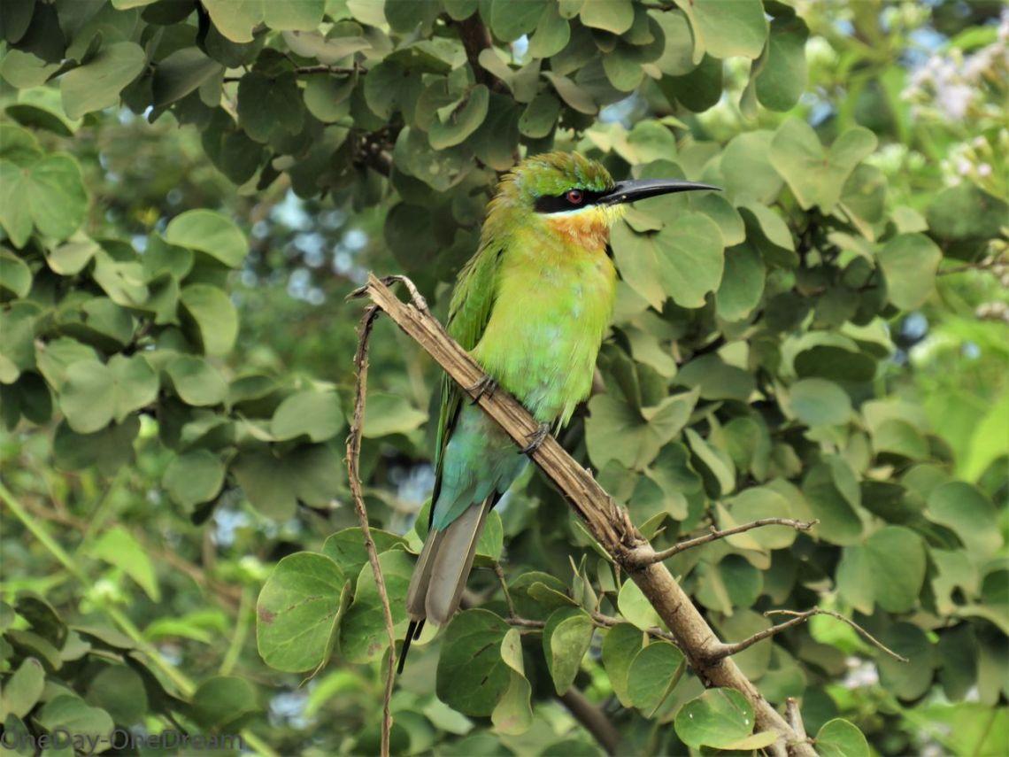 oiseau-udawalawe-sri-lanka