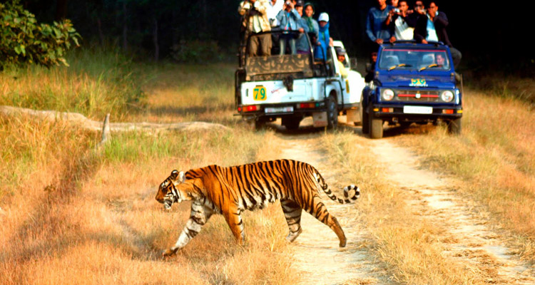 One Day Alwar Local Sightseeing Trip by Car Sariska Wildlife Sanctuary