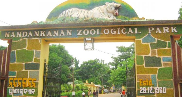 One Day Bhubaneswar Local Sightseeing Trip by Car Nandankanan Zoo