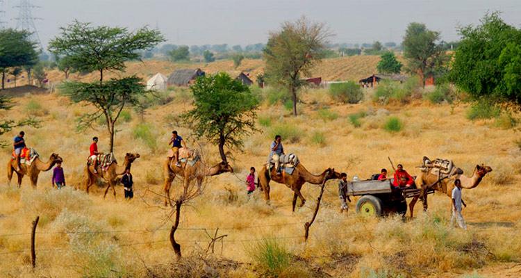 One Day Bikaner Local Sightseeing Trip by Car Desert safari