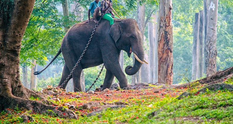 One Day Mysore to Coorg Trip by Car Dubare Elephant Camp and Boat River Rafting