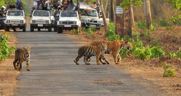 One Day Mysore to Madikeri / Nagarhole Jungle Safari Trip by Car Nagarhole National Park