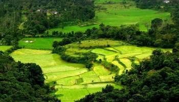 One Day Mysore to Madikeri / Nagarhole Jungle Safari Trip by Car Header