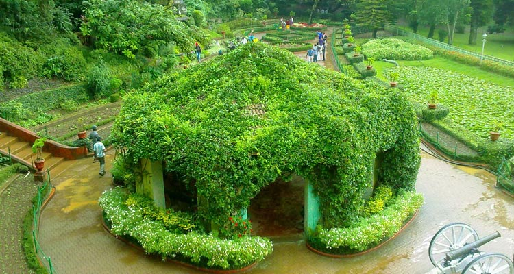One Day Mysore to Ooty Trip by Car Ooty Botanical Garden