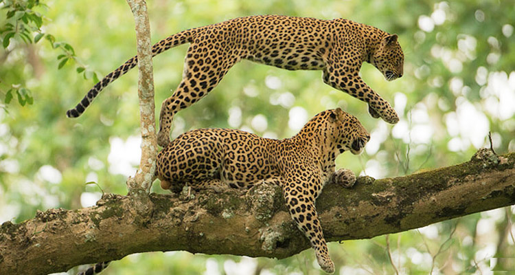 One Day Mysore to Ooty Trip by Car Mudumalai National Park