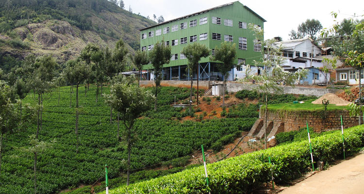 One Day Mysore to Ooty Trip by Car Ooty Tea Factory