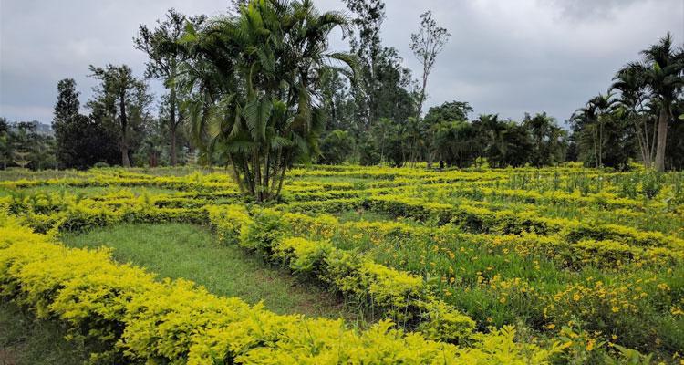 One Day Vizag to Araku Valley Trip by Car Padmapuram Gardens