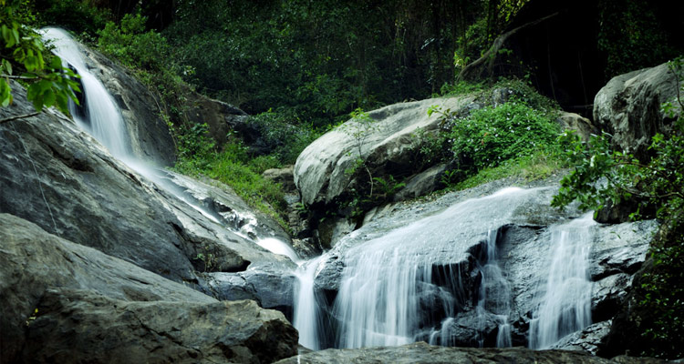 1 Day Coimbatore to Pollachi and Valparai Tour by Cab Monkey Falls