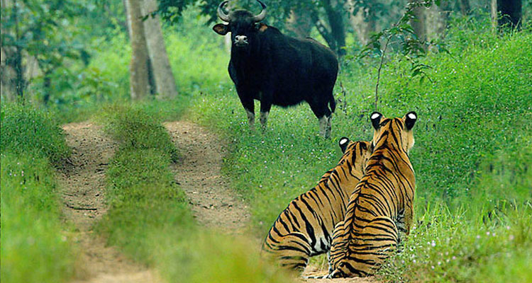 1 Day Coimbatore to TopSlip Tour by Cab TopSlip Wildlife Sanctuary