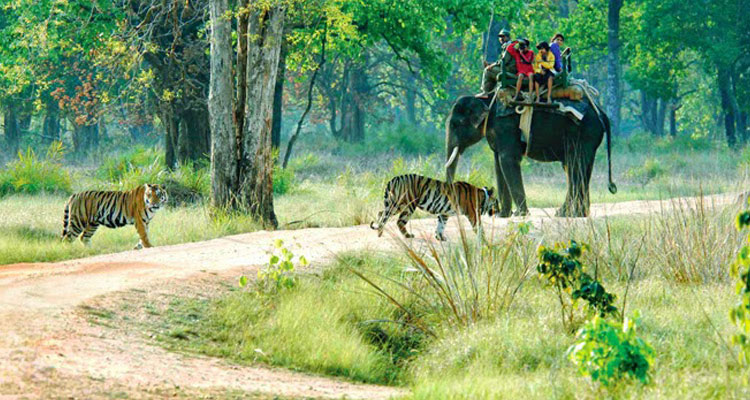 1 Day Hyderabad to Srisailam Mallikarjuna Tour by Cab Srisailam Tiger Reserve