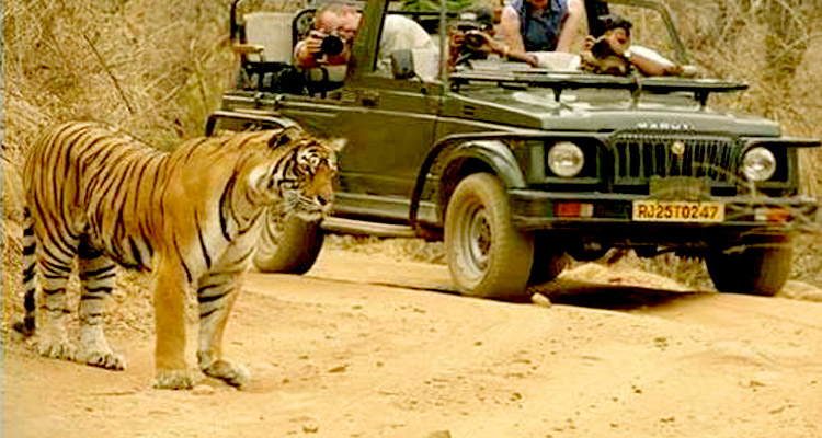 1 Day Alwar Local Sightseeing Tour by Cab Sariska Wildlife Reserve