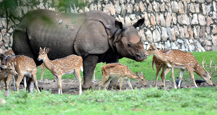 1 Day Guwahati Local Sightseeing Tour by Cab Assam State Zoo