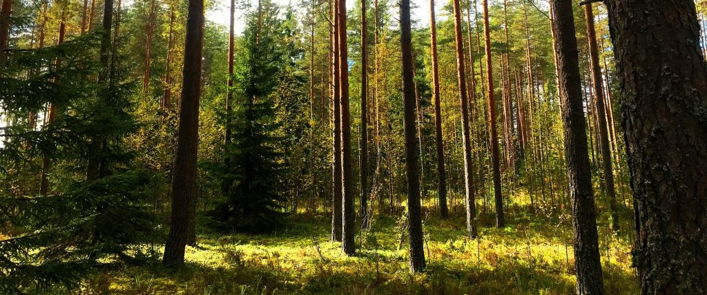 Finland Forest Nature