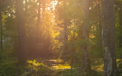 Private Forest Bathing Tours in Helsinki