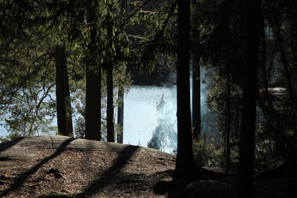 Forest bathing - One Day In Helsinki