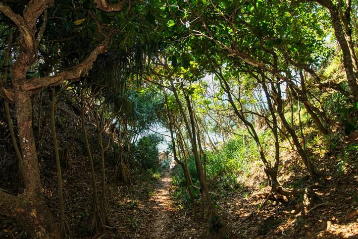 Lush Nature