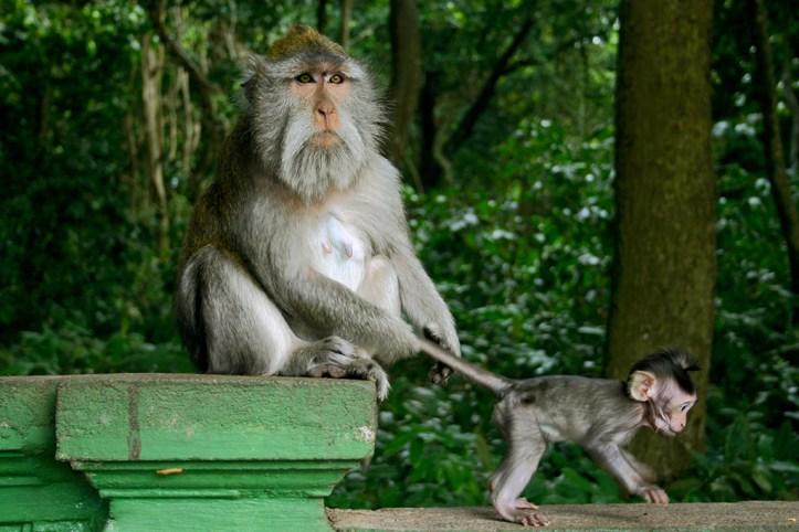 Sacred Monkey Forest Sanctuary, Bali