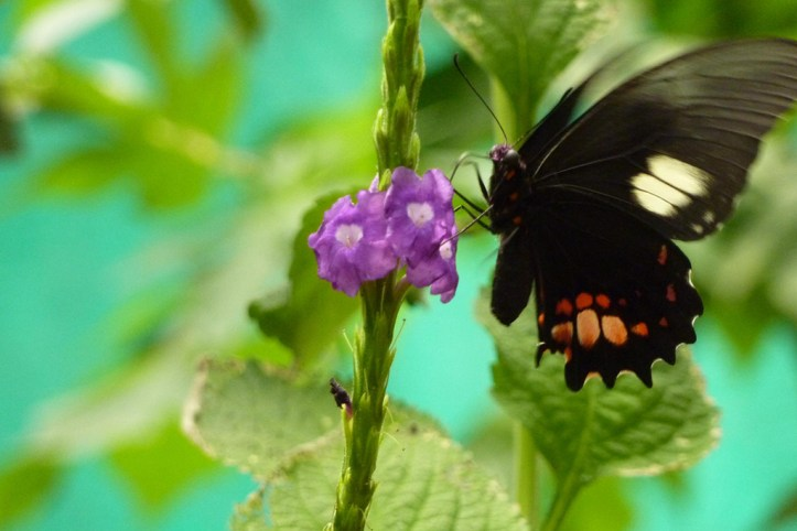 The butterfly garden, Mindo