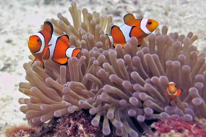 Koh Lanta marine life