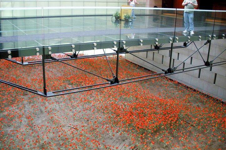 9000 poppies