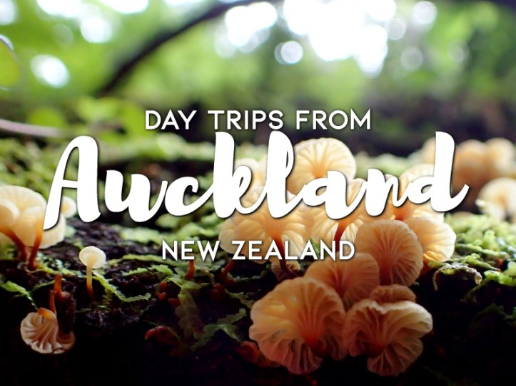 Day-trips-from-Auckland,-New-Zealand