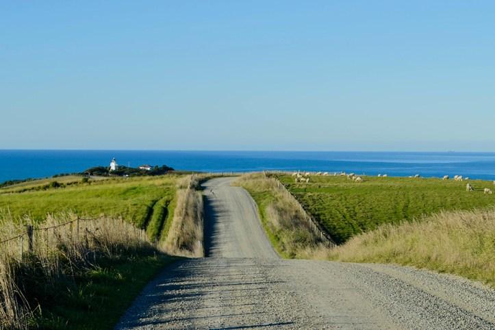 Dunedin area