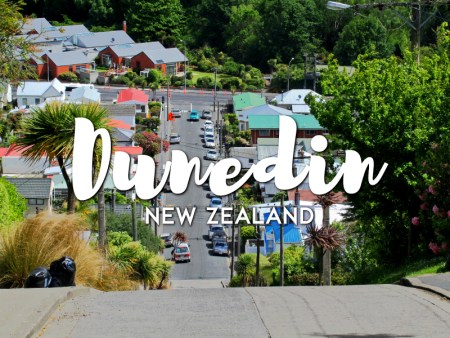 One day in Dunedin Itinerary